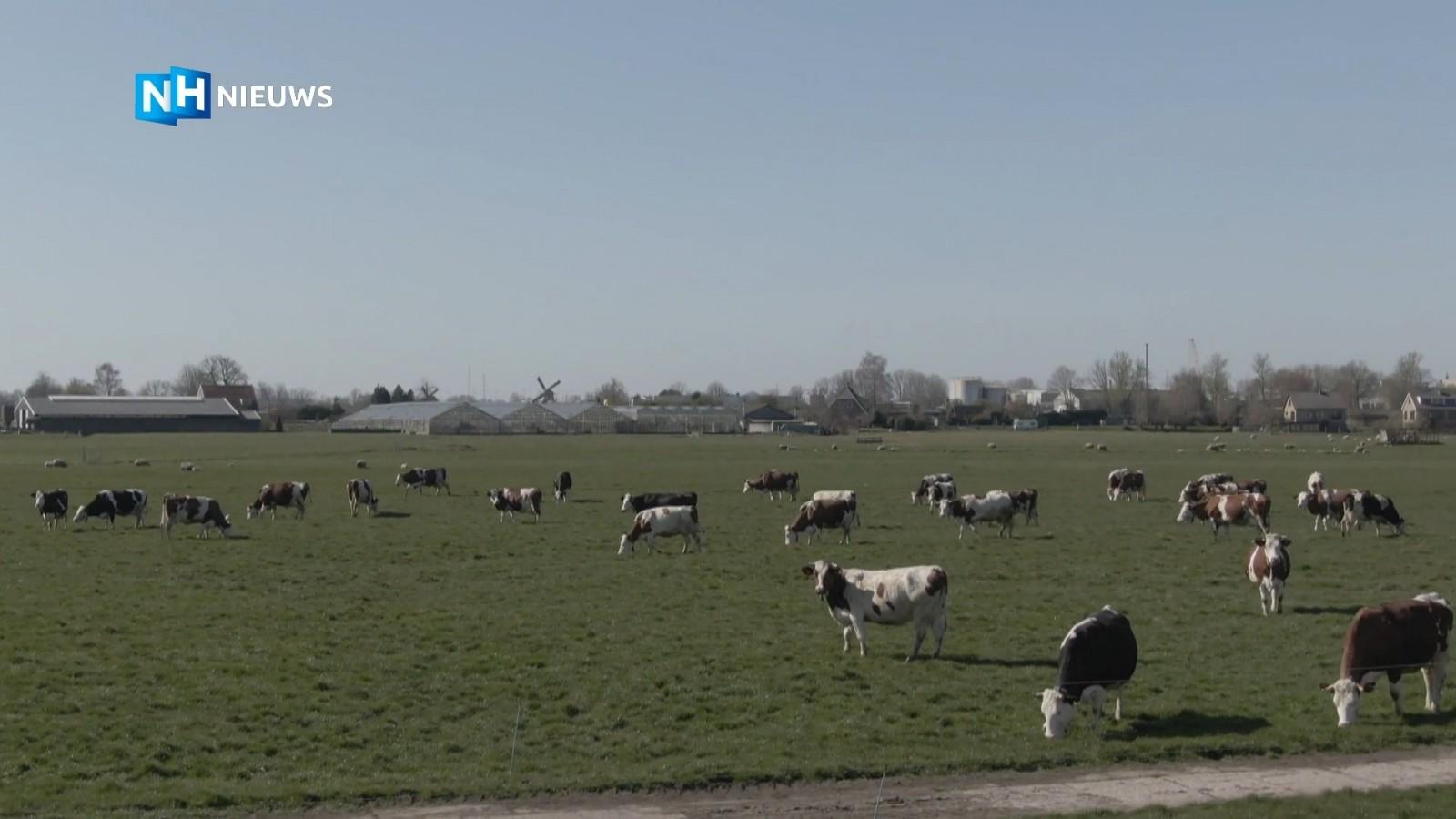 De lente laat zich eindelijk echt zien: de koeien mogen weer naar buiten
