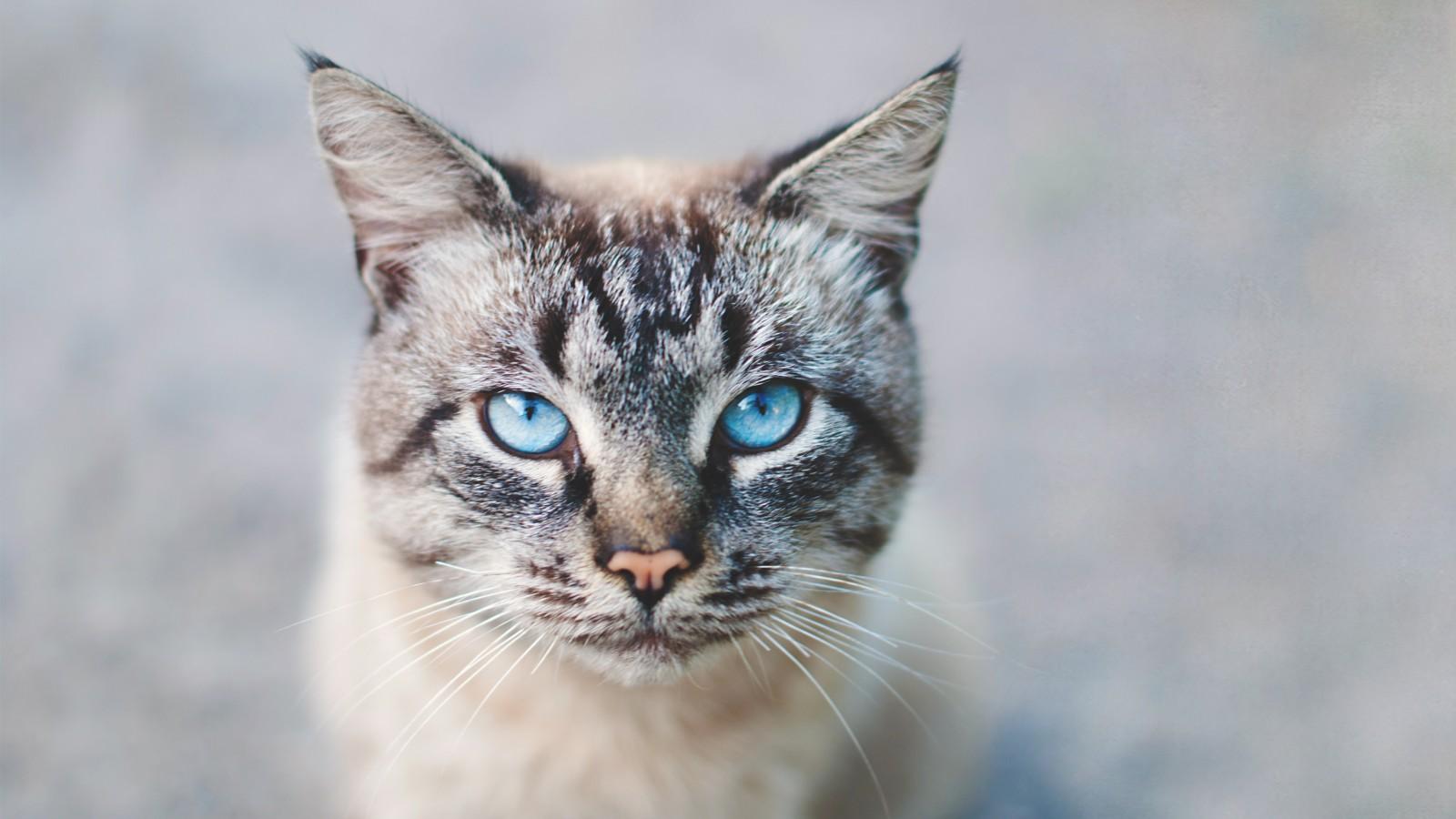 Huizerse moet kat Tijger laten inslapen nadat hij met frituurvet overgoten werd
