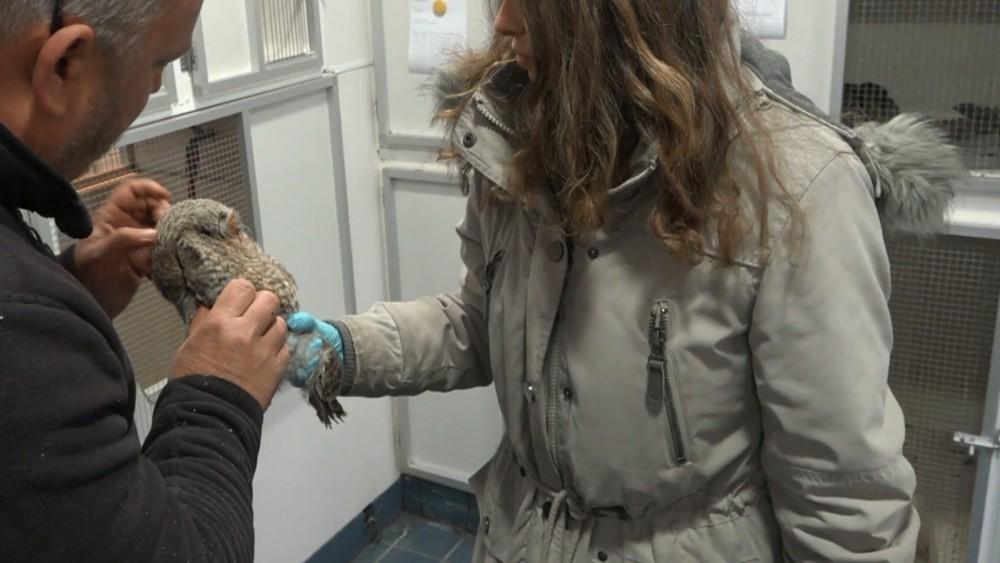Provincie gaat met regels worstelende dierenopvangcentra helpen