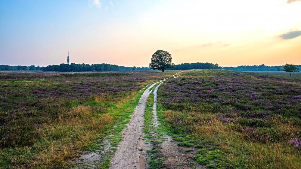 Gooise natuurbeschermers roepen politiek op: 'Bescherm ons unieke landschap'