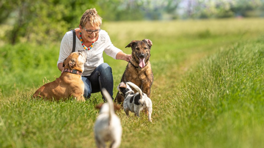 Honden ziek door mogelijk 'giftige stof' op heide rond Huizen